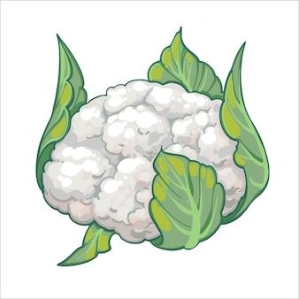 Bloemkool, hand getrokken illustratie geïsoleerd op een witte achtergrond. verse cartoon groente. seizoensgroenten.