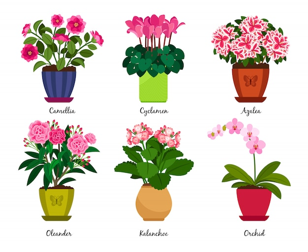 Bloempotten en kamerplant bloemen in potten