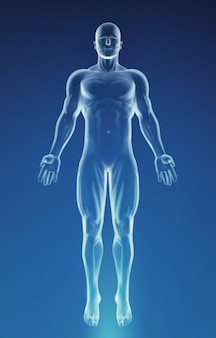 Blue human anatomy body