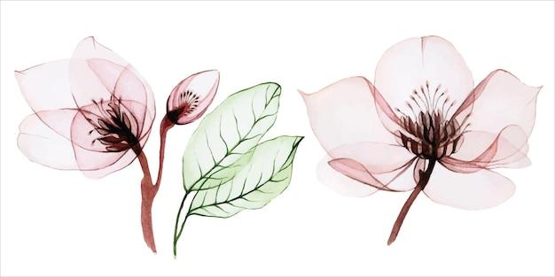 Boeket transparante bloemen transparant roze wilde rozen en paarse wilde bloemen groene eucalyptus