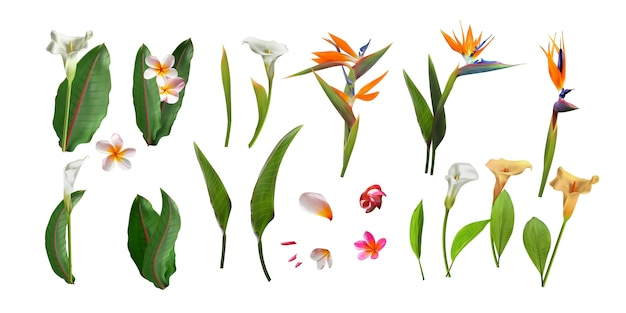 Boeket van bloemen met exotisch blad dat op witte achtergrond wordt geïsoleerd.