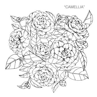 Boeket van camellia bloem tekening illustratie.