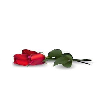 Boeket van rode rozen geïsoleerd