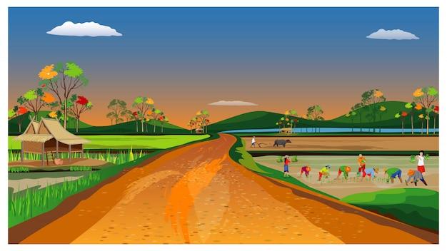 Boer transplantatie rijst zaaien in rijstveld vector ontwerp
