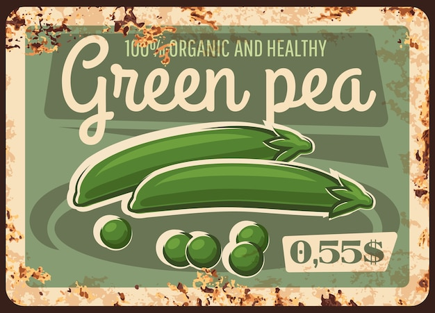Boerderij groene erwt roestige metalen plaat. rijpe erwtenzaden en peul, biologische peulvruchten.