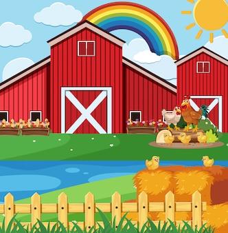 Boerderij scène met veel kippen op de boerderij