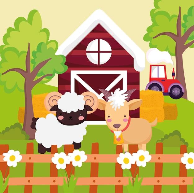 Boerderij schapen en geiten