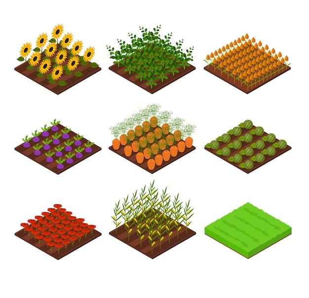 Boerderij set isometrisch aanzicht bed basiselement landbouw met bloemen, groenten en gras voor web, app.