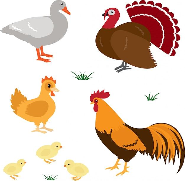 Boerderij vogels ingesteld Premium Vector