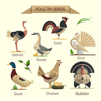 Boerderij vogels vector set in vlakke stijl ontwerp. collectie pluimvee huisdieren. gans, kip, eend, gobbler, duif.