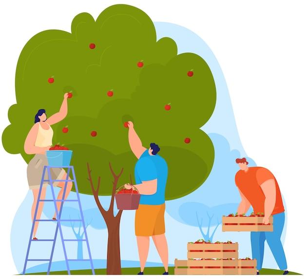 Boeren oogsten bomen en fruit. illustratie