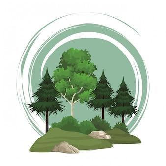 Bomen natuur landschap