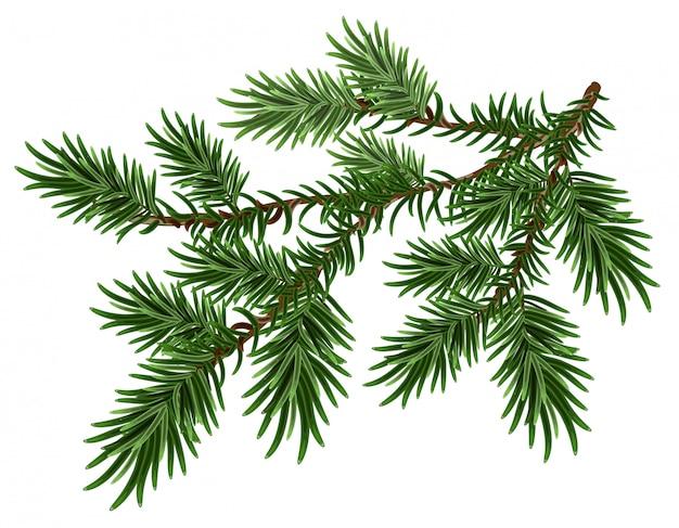 Bont-boomtak. groene pluizige pijnboomtak