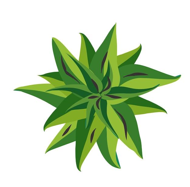 Boom bovenaanzicht. makkelijk te gebruiken in uw landschapsontwerpprojecten plant van de kroon van natuurlijk. natuur groene ruimten.