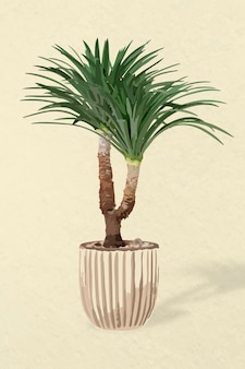 Boom vectorkunst, agaveboom in een bloempot