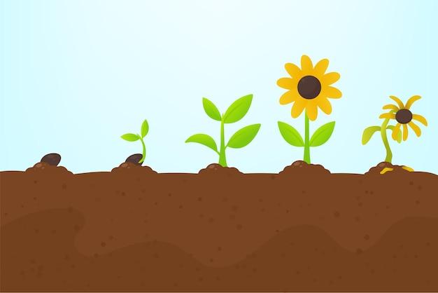 Boomgroei. het planten van een boom die uit zaad is ontsproten, wordt een zaailing met bloemen en sterft.