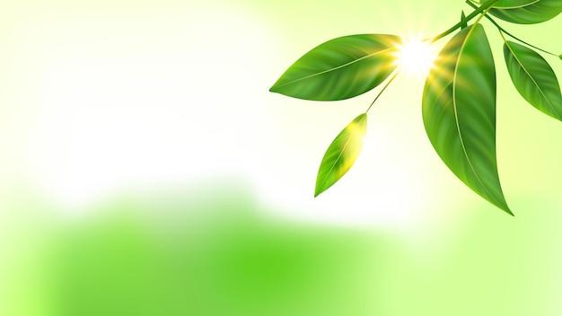 Boomtak groene bladeren en zon kopie ruimte vector. verse natuurlijke plantenbladeren en stralen. natuur botanische ecologie milieu en zonnige stralende balken sjabloon realistische 3d illustratie
