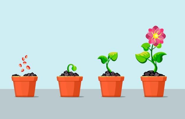 Boomtrapjes planten in pot.