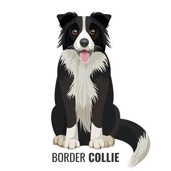 Border collie-huisdier zit geïsoleerd op wit met zijn naam onder vectorillustratie. grote binnenlandse realistische hond met open mond