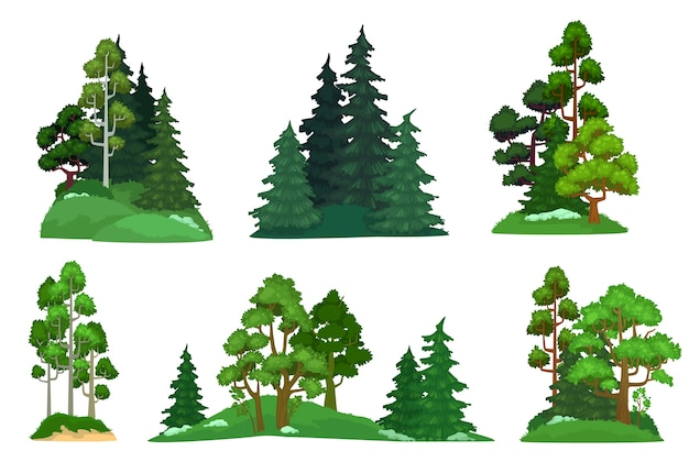 Bos bomen. groene dennenboom, bossen dennen samenstelling en geïsoleerde bomen