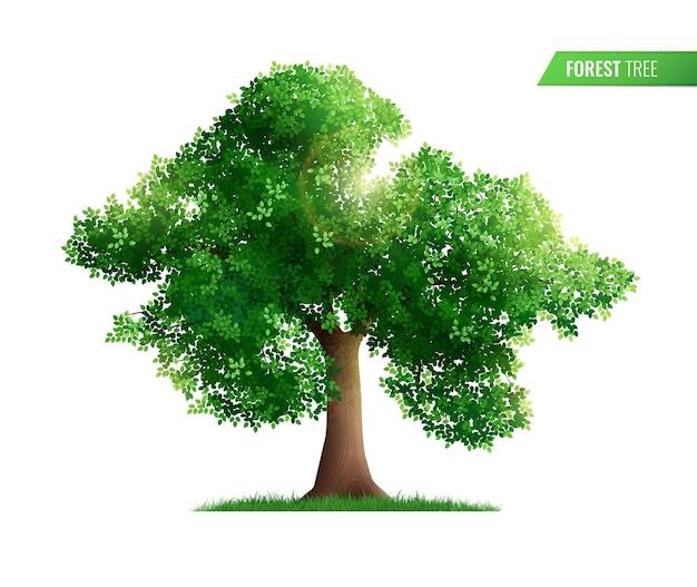 Bos boom geïsoleerd