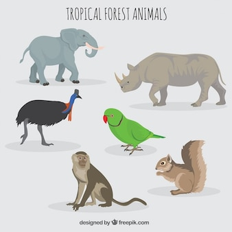 Bos en wilde dieren