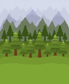 Bos met pijnbomen