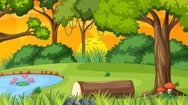 Bosaardscène met vijver en vele bomen in zonsondergangtijd