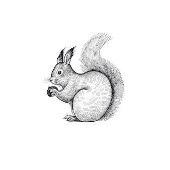Boseekhoornillustratie van het dier.