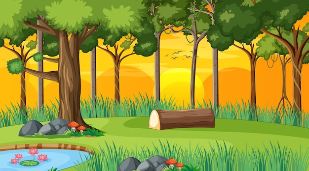 Boslandschapsscène bij zonsondergang met veel verschillende bomen