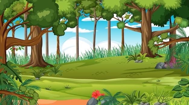 Bosscène met verschillende bosbomen Premium Vector