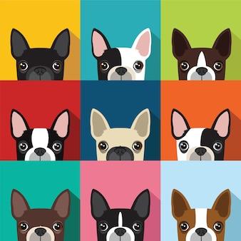 Boston terrier patroon