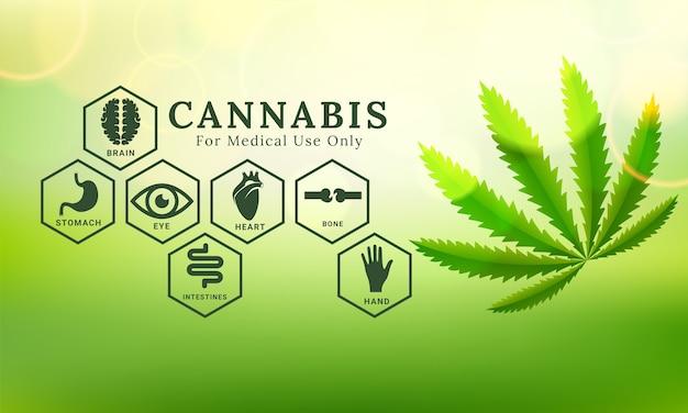 Botanische cannabis verlaat achtergrond. vector illustratie