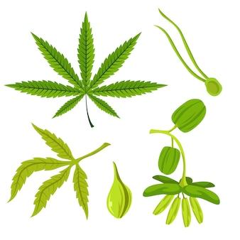 Botanische cannabisbladeren