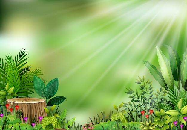 Botanische fabrieksmening op zonlicht