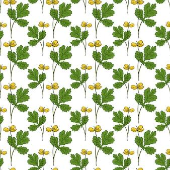 Botanische kruiden naadloos patroon