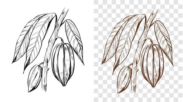 Botanische schets hand getrokken illustratie