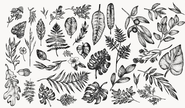 Botanische vintage planten en bloemen illustratie set