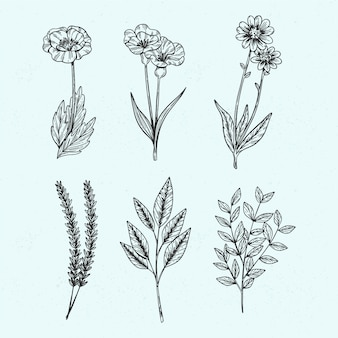 Botanische wilde kruiden in vintage stijl
