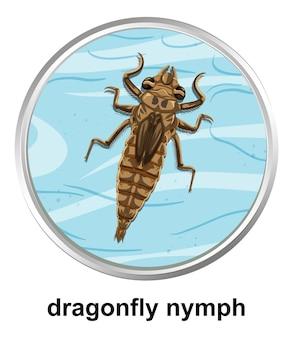 Bovenaanzicht van libellennimf op het water