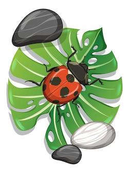 Bovenaanzicht van lieveheersbeestje op monstera blad geïsoleerd