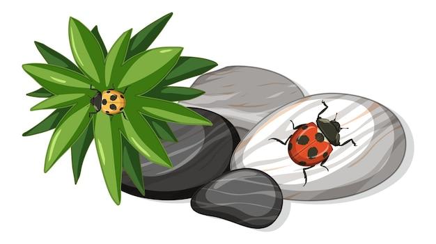 Bovenaanzicht van lieveheersbeestje op stenen blad geïsoleerd