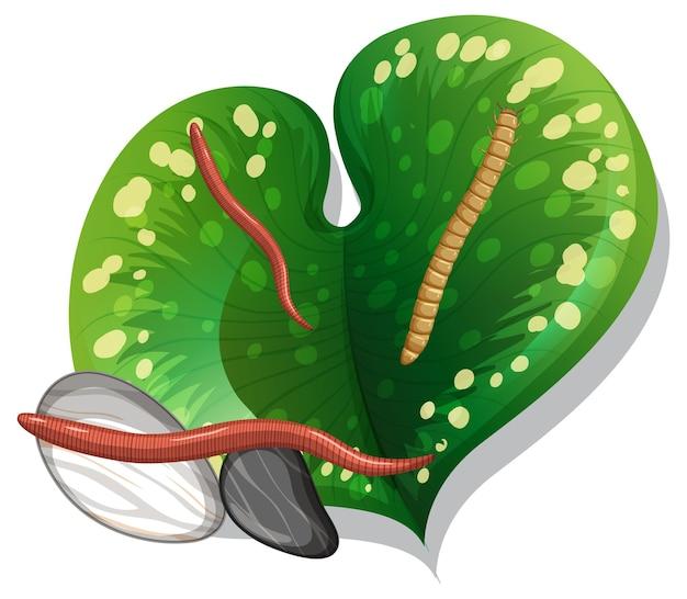 Bovenaanzicht van regenworm op een blad geïsoleerd