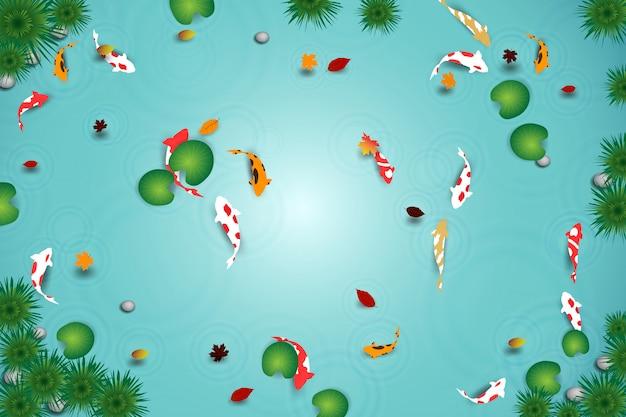 Bovenaanzicht van schoon water meer met koi vissen.
