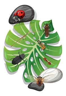 Bovenaanzicht van veel insecten op monstera blad geïsoleerd