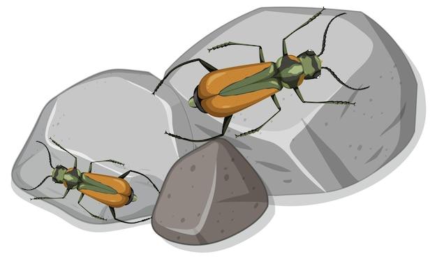 Bovenaanzicht van veel malachius aeneus-insect op stenen