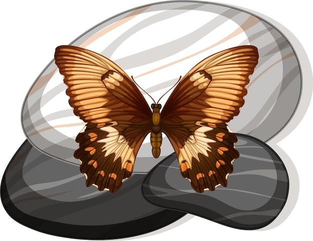 Bovenaanzicht van vlinder op een steen op wit