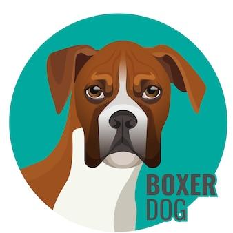 Boxer hond portret vectorillustratie geïsoleerd op wit. middelgroot, kortharig hondenras in blauwe cirkel met tekst