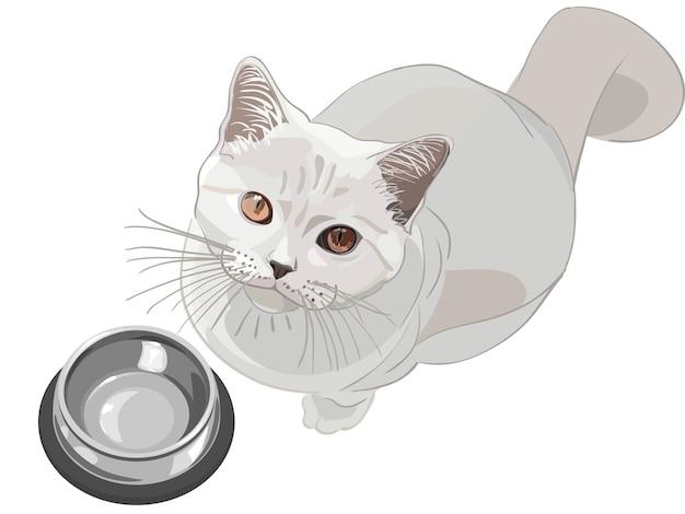 Britse lila kat zit in de buurt van lege kom
