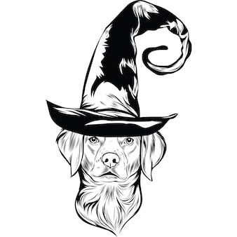 Brittany spaniel dog in witch hat voor halloween